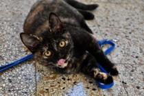 Gattine tartarugate di 3 mesi cercano casa