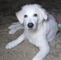 Georgia, soffice cucciola di 4 mesi