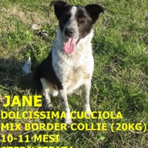 Jane, cucciolona mix border collie, sterilizzata