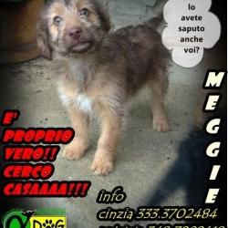 Meggy salvata da morte certa, cerca casetta e tanto amore. Alphadog