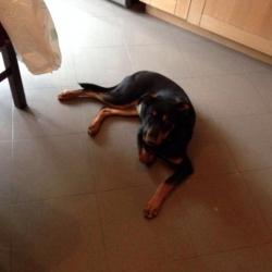 Molly cucciola dolcissima di 5 mesi