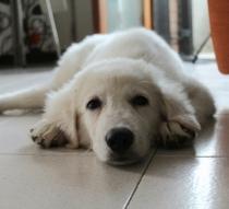 Texas, meraviglioso cucciolo di 4 mesi